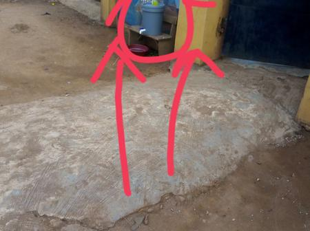 See What Was Spotted Outside A School In Ikorodu Before Lesson Hours