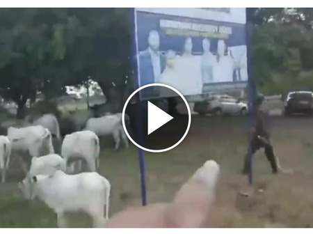 Video: Hilarious Reactions As Man Laments Over A Herdsman Moving His Cows Within A University