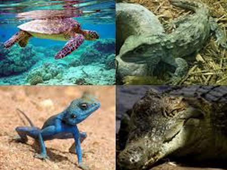 Some of The Dangerous Animals You Can Legally Own