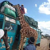 What a Giraffe Did To This Bus Leaving Kenyans Talking