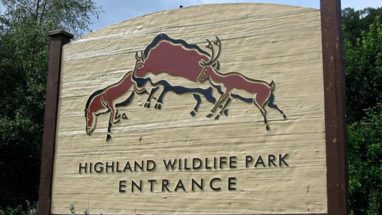Endangered species calf born at Scots wildlife park