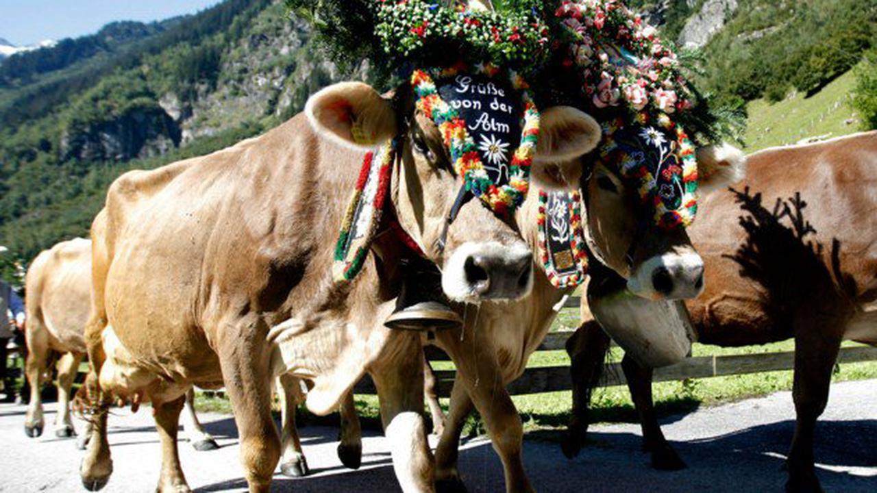 Bei Almabtrieb in Tirol: Pkw fuhr in Menschenmenge