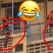 'Akosua Spiderwoman': Video Of ATU Student Climbing Hostel Wall To See Her Boyfriend Is A Whole Mood
