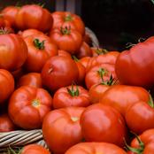 Did You Know That Tomato Is A Fruit? Checkout What It Does For Those Who Consume It