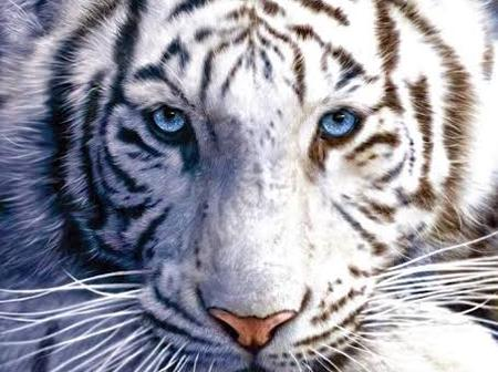 Check Out These 10 Of The Most Beautiful Animals In The World