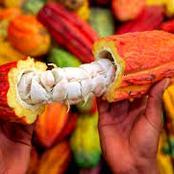 Un chocolatier américain refuse d'acheter le cacao en Côte d'Ivoire, le Conseil café-cacao en colère