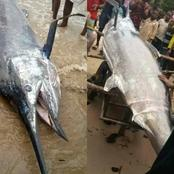 Photos Of Strange Fish Caught By Fishermen Surface Online