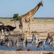 Top 5 des animaux les plus dangereux de l'Afrique