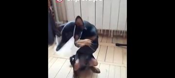 M Toro M | Funny videos #3