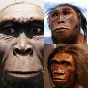 See 7 species of mankind that lived on Earth, you probably didn't know about [Photos]