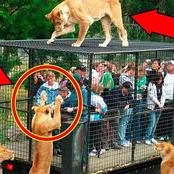 See The Dangerous Zoo Where Humans Are Locked In Cage And Animals Roam Around Freely (See Photos)