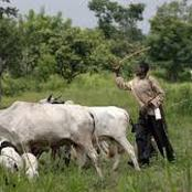 Opinion: Food blockade to the South, a reason why open grazing must not be allowed in the South