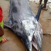 The Moment A Man Caught A Huge Fish In A Fishing Settlement (Pictures)