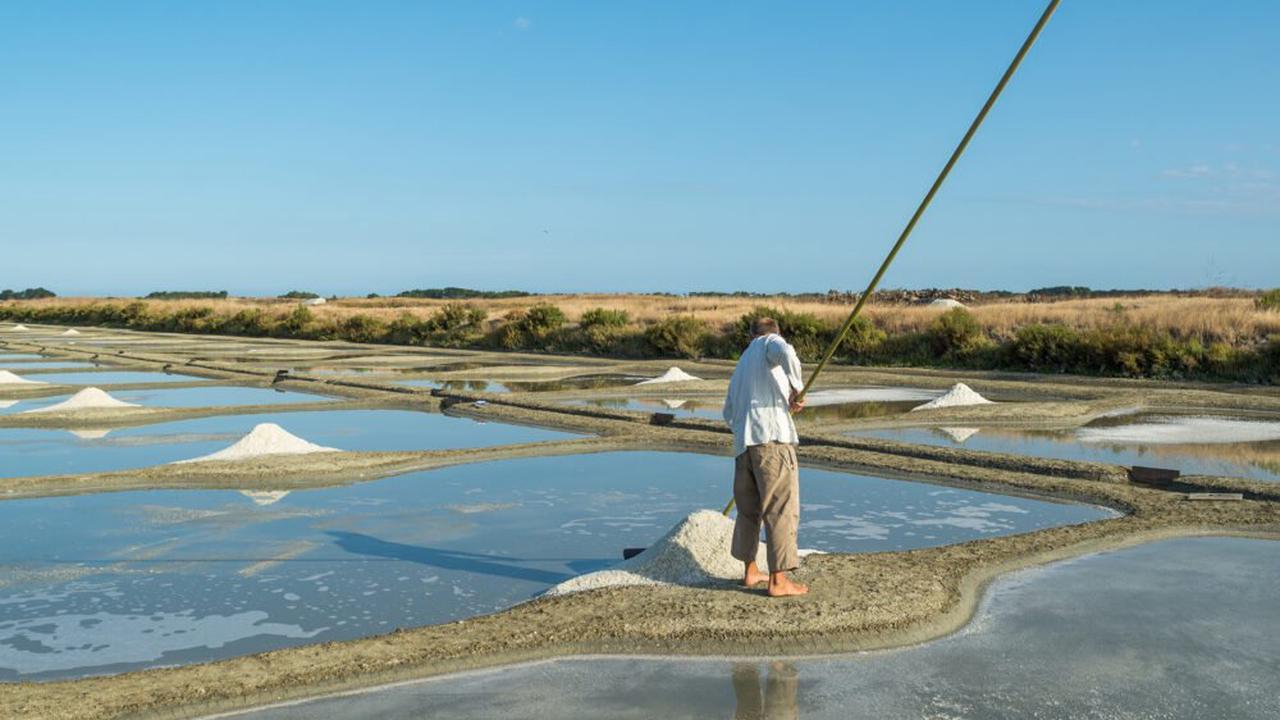 Noirmoutier. Récolte de sel: le coloï se termine sur une bonne pesée