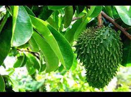 How to use these fruits to cure diabetes, cancer and other diseases