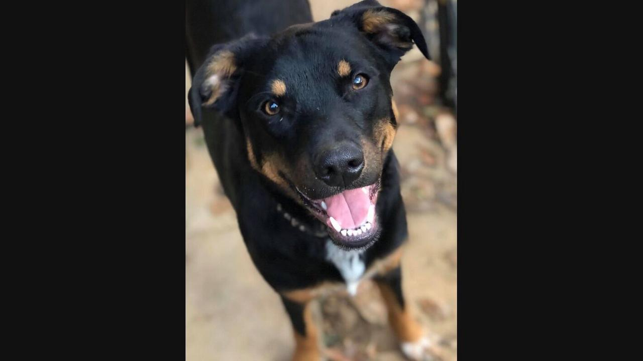 Exeter Pets Waiting To Be Adopted: Lotty, Percy, Wyatt & More
