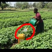 She Lost her parents and brother, she decided to become a school gardener to pay her school fees