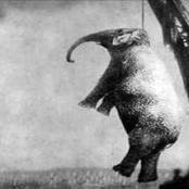 بطيخة كانت السبب فى إعدامها.. تعرف على قصة اغرب إعدام حيوان فى التاريخ