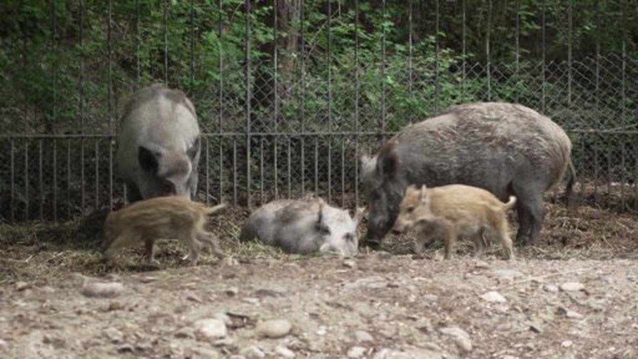 Biene Maja & Zoo Kidz: die Kindersendung am Wochenende