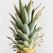 Cure these infections and be healthier with no side effects by boiling pineapple leaves, see how