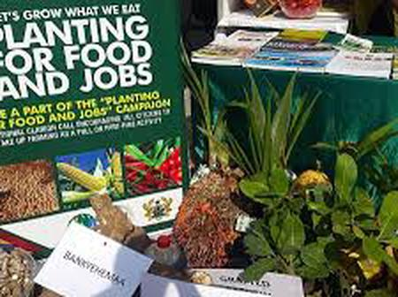 Why Planting For Food And Jobs Might Fail