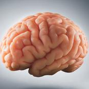 See How Amazing The Human Brain Is See How Amazing The Human Brain Is  Part 1