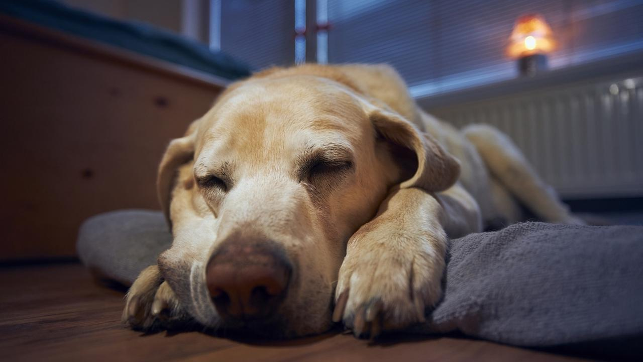 Living with Pets: Help your older pet stay comfortableat home