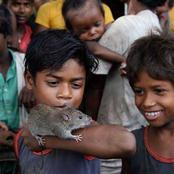 See The Temple Where People Serves Rats Like Gods.