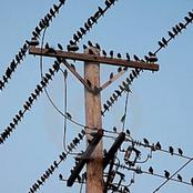Ever Wondered Why Birds Sit On Electric Wires Yet They Don't Get Electrocuted? This Is Why