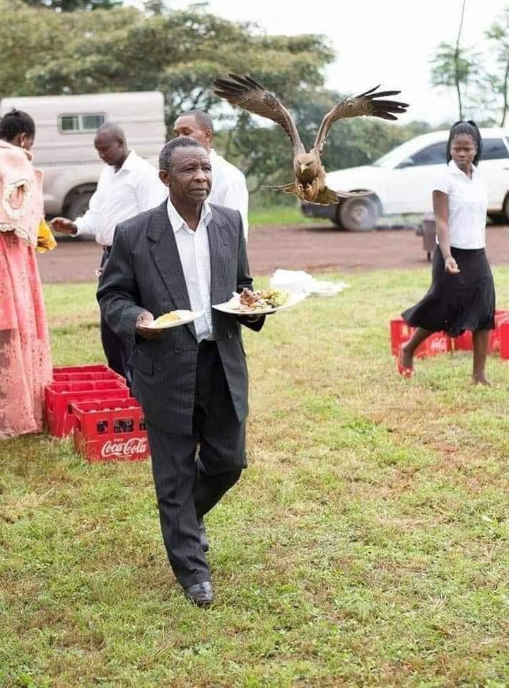 b3457150e47f73cf9111853f2a8e6bb2?quality=uhq&resize=720 - Man Almost Weeped After a Hawk Snatched Meat On His Food At A Wedding Ceremony