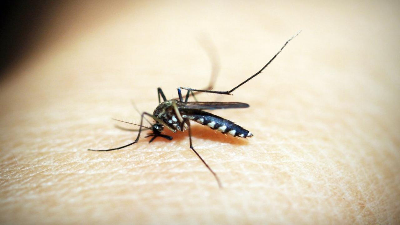 Lucknow sees spike in dengue cases