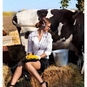 Beautiful Pictures of Women Rearing and Milking Cows