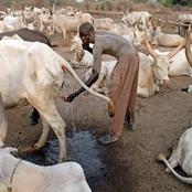 Why This African Tribe Bathes With Cow Urine & Covers Their Bodies In Cow Dung Ashes