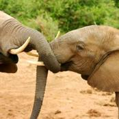 Here are Two Animals That Their Females are Stronger Than The Males