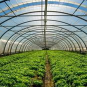 The largest greenhouse built by Nana Akufo Addo in Akumadan