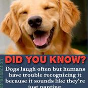 See reasons why human being have in recognizing the dog when it laughs