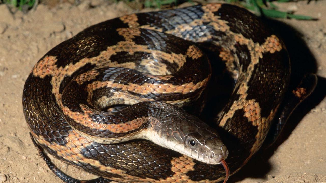 San Antonio expert says snake sightings to increase during cooler months
