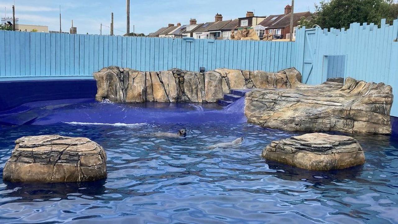 Deer spotted swimming in sea on Norfolk coast