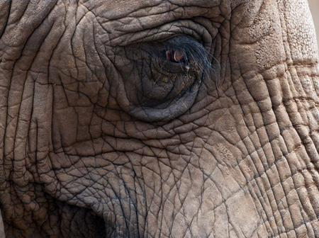 Opinion: Why Most Elephants Are Vengeful