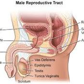 How to maintain prostate health