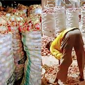 Northern Traders Cry Out As The Price Of Onion Bag Worth N35k Drops To N7K In Their Market In Kano