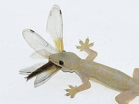If You Have Wall Gecko In Your House, You Need To Know This, They Can Kill You