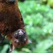 تحذير من الصحة العالمية من انتقال أمراض جديدة من الحيوانات للبشر