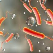 Be aware of Cholera and how to treat it