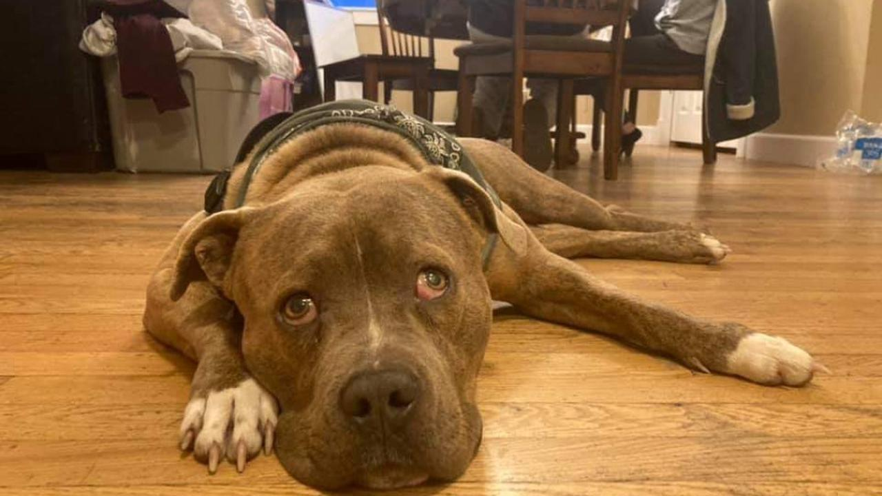 Nearly blind dog rescued from Texas dump now being fostered in Colorado
