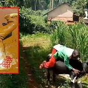 Famous Kisii Musician, 'Embarambamba' In Trouble As Petition Protesting His Crazy Antics Is Launched