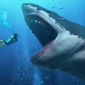 See 10 Facts About The Biggest Shark That Ever Lived, It Is Called Megalodon