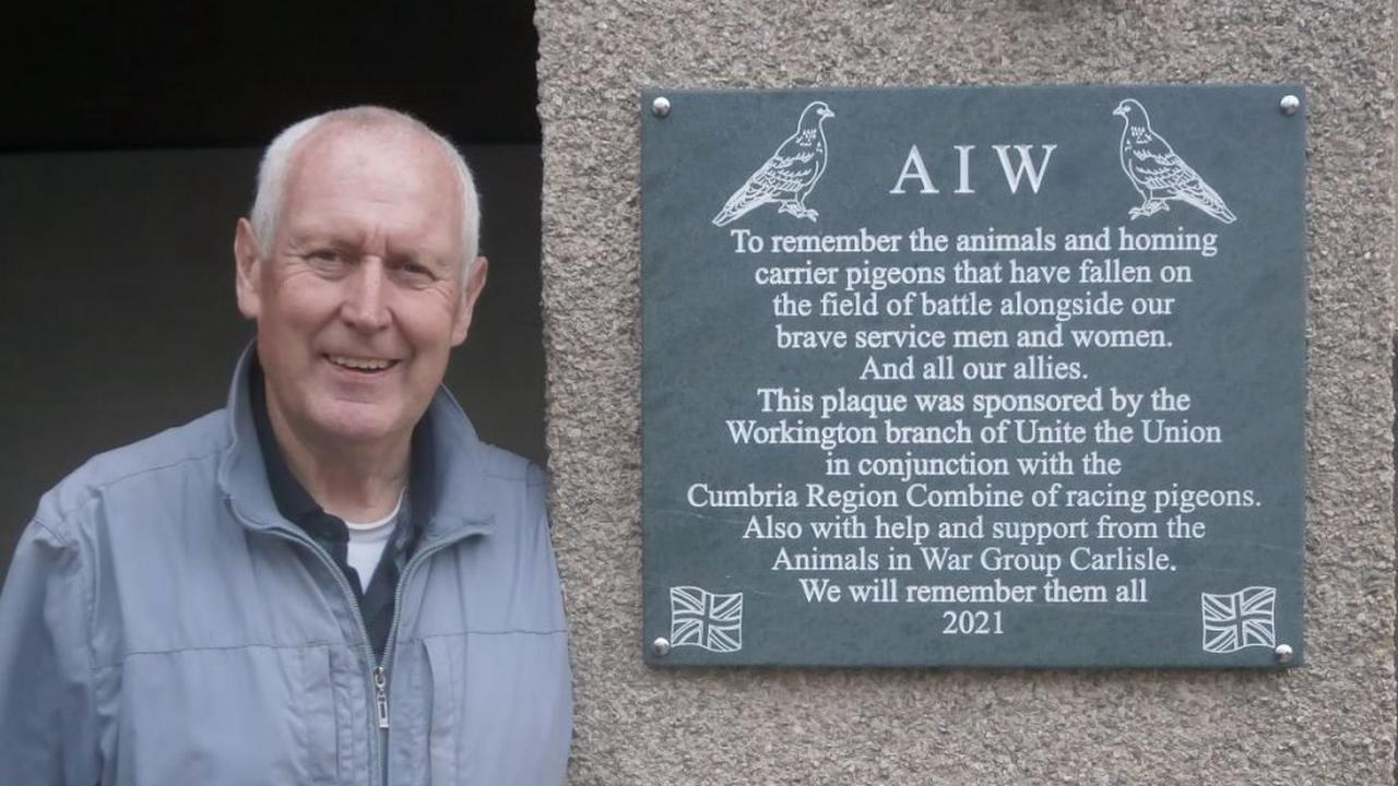Remembering pigeons' part in wartime