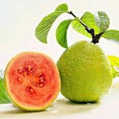 Important Health Benefits of Guava Leaves That you Must Know!