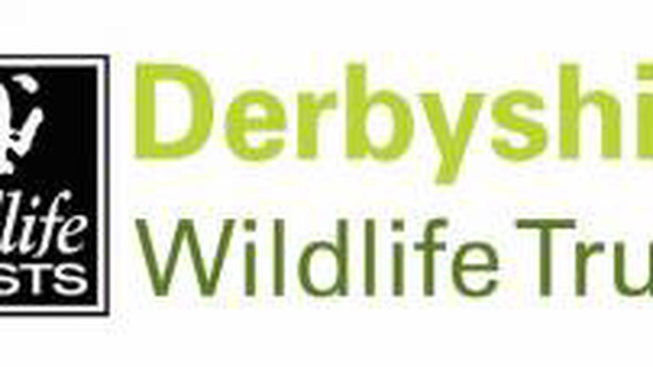 1000th badger vaccinated in Derbyshire